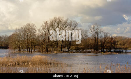 Dark storm clouds over marsh with bare winter trees and reed in Bourgoyen nature reserve, Ghent, Flanders, Belgium - Stock Photo