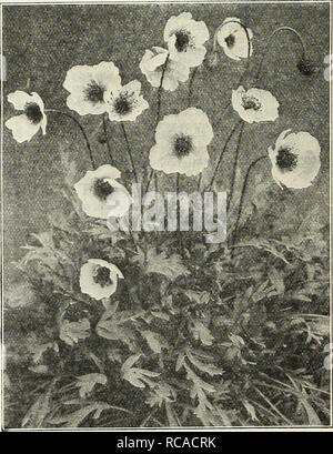 . Dreer's autumn catalogue 1929. Bulbs (Plants) Catalogs; Flowers Seeds Catalogs; Gardening Equipment and supplies Catalogs; Nurseries (Horticulture) Catalogs; Vegetables Seeds Catalogs. Oriental Poppy Oriental Poppies (Papaver Orlentale) Oriental Poppies can be sown any time during the summer and early autumn. The plants disappear during July and August appearing again as soon as the weather gets cool. When this fall growth starts is the time they should be transplanted to their permanent flowering quarters. It is well to mark the places they are planted with a stake to insure the roots again - Stock Photo