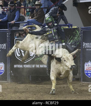 Denver, Colorado, USA. 14th Jan, 2019. Bull Rider CHASE OUTLAW of Hamburg, AR rides Snake Eyes during the 25th. Mexican Rodeo at the National Western Stock Show at the Denver Coliseum Monday evening. Credit: Hector Acevedo/ZUMA Wire/Alamy Live News - Stock Photo