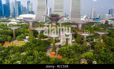 Supertree Grove, Gardens by the Bay, Singapore - Stock Photo