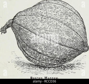 """. D. M. Ferry & Co's wholesale list of seeds for 1892. Seed industry and trade Michigan Detroit; Vegetables Seeds; Fruit Seeds; Agricultural implements; Flowers Seeds. Tel. Cipher. Per Lb. Oconto $0 20 SPINAGE— Savoy Leaved Round Summer Improved Thick Leaved Long Standing, d.irk giwn, thick leaved Prickly Winter Long Standing Prickly, )u"""".. -very superior SQUASH, Summer Early Yellow Bush Scallop Early White Bush Scallop Summer Crkneck Mammoth Summer Crookneck, neze Perfect Gem OIdh AUTUMN OR WINTER SORTS. Early Prolific Orange Harrow, new Oliver 40 Ocean.. .. Oconee... Ogemaw. Ogle O - Stock Photo"""