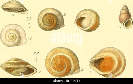 . Donum Bismarckianum. Eine sammlung von Südsee-conchylien. Shells; Mollusks. :^ //'. m I m 1' f %%. // /6. ?</ /'/. Please note that these images are extracted from scanned page images that may have been digitally enhanced for readability - coloration and appearance of these illustrations may not perfectly resemble the original work.. Martens, Eduard von, 1831-1904; Langkavel, Bernhard August, 1825-1902. Berlin, F. Berggold - Stock Photo
