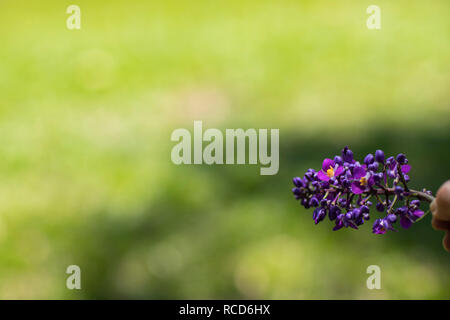 Hand holding a purple flower in blurred background. - Stock Photo