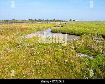 Panorama of salt marshes and tidal flats at low tide of Wadden Sea on West Frisian island Schiermonnikoog, Netherlands - Stock Photo