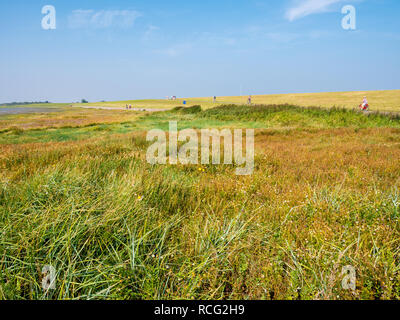 Salt marshes and people riding bicycles on dike of West Frisian island Schiermonnikoog, Netherlands - Stock Photo