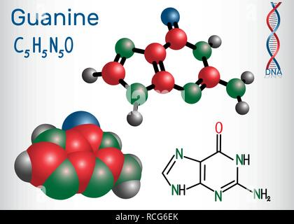 Guanine (G, Gua) - purine nucleobase, fundamental unit of the genetic code in DNA and RNA. Structural chemical formula and molecule model. Vector illu - Stock Photo