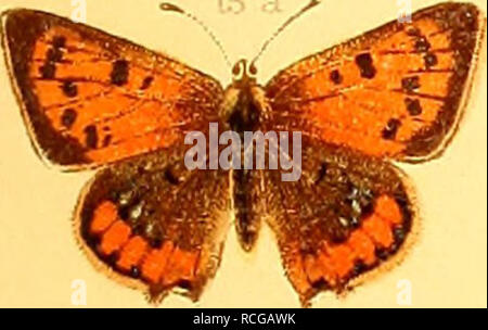 . Die Schmetterlinge Europas. Lepidoptera; Caterpillars. . Please note that these images are extracted from scanned page images that may have been digitally enhanced for readability - coloration and appearance of these illustrations may not perfectly resemble the original work.. Hofmann, Ernst, 1837-1892; Spuler, Arnold, 1869-. Stuttgart, E. Schweizerbart - Stock Photo
