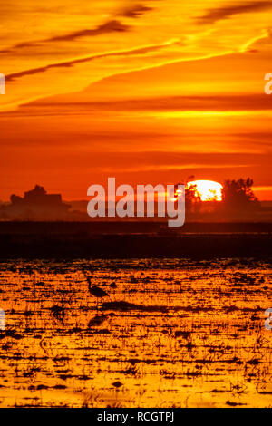 Beautiful sunset over rice field with heron - Stock Photo