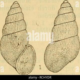 . Die Mollusken-Fauna Mitteleuropa's. Mollusks. 629 kirte Ecke ausgezogen, nicht nach rechts vortretend; Mund- saum scharf, zusammenhängend, kaum erweitert, etwas ver- dickt; Spindelrand umgeschlagen, fest angedrückt; Deckel? Fig. 422.. Vit. gracilis. Höhe 1,9 mm., Durchm. 0,6 mm. Verbreitung: In Krain im Auswurfe der Bäche. Bemerkung. Die Art ist sehr eigenthümlich und von allen übrigen des Genus leicht zu unterscheiden. 6. Vitrella Pfeifferi n. sp. Thier: nicht beschrieben. Fig. 423,. Please note that these images are extracted from scanned page images that may have been digitally enhanced f - Stock Photo