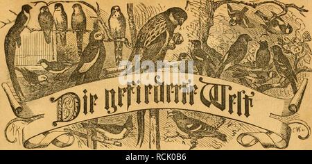 ". Die Gefiederte Welt. Birds. 3citfcl)rift für l^oödlicliliabcr, Mi]Ux unb 4'>ä«t^l^^'' SBcftelluncicii biird) jc^c Seilet)- t)itihlmifl foiuie jcöc >J?oftanftaIt. S)!rciii Dicrtt'liöilrlid) 3 Start. ©ücijciitlid) ""eine Stummer. herausgegeben oon Dr. :Ãarl Ku^. üliijeiQen tnerbcii bie flefpiiltene *)JefitAcife mit 25 ie alt fann eine 0an§ lyerben'? â 33i;ieflid;c 5!Tcitt[)eiIunfli'n: Su^terucbniffc; eturnifdni'all'o. â 3(n= fragen unb JdtC'fiinft: Ãafabuv; ii'cUenfittid'c, ?eri utn ben Manen ^Borgen; ^yiattfdniiciffittid'c; 3ianl)fuf;br.ftarb; 9tol)ni'ciI)C. â ?UtÂ« ben is - Stock Photo"