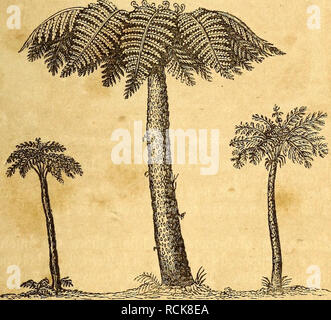. Elements of geology. Geology. PART 11. CHAPTER XX. 249 Recent Tree-Ferns. genus Sigillaria, were true arborescent ferns, as for example, that section which has been named Caulopteris by Lindley and Hutton. (See Fig. 251.) But these are comparatively rare, whereas of the other section (Fig. 252.) more than forty species have been described. In these the scars on the stem are smaller and more regularly arranged in parallel series on the fluted bark. (Fig. 252.) The recent tree-ferns belong to one tribe (Polypodiacew,) and to a small number only of genera in that tribe, in all of which the surf - Stock Photo