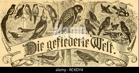. Die Gefiederte Welt. Birds. 3citfcl|rift für Sogcllieb^aber, ^3iic^ter uul) ^§änMer. 'l^cflcllmiftoii öiird) jc&e ^'nd)- IjiitiMuiid, jonnc ieSc *i'oftniiftnlt i'ri-is iiicrtcljiüiilidi :â : 5}i'(iff. ®prt)fiitlld) eine *)('iiitimfir. Wr. 45. SerauSÃeöebeu üon Dr. iüttrl Ku^. »ieSn!tioii: Scrlin, Scilcnllinnceftrnftc 81 III. Sliijeinen rocrbeit bic (f|Paltenc *l!ctit}eiie mit 25 *)Jfji. bcrcdmct iiiib 'â BeftcduTiiicn in bcr Ãjpebition imb !)lcbnftioii entflCrtciuicüommcii. Berlin, Ãen 8. =aoDfinbcr 1883. XII. J)at)r9an9. 3 n li tt I t: Uiifcrc ä)idfcii. â¢decbftfutter unb b - Stock Photo