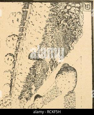 . Die Gartenwelt. Gardening. XXV, 29 Die Gartenwelt. 285 Schönheiten reich, aber nur als Allgemeingut zu be- trachten. Das traute Heim- gefühl, welches den Deut- schen auszeichnet, fehlt. Ge- steigert wurde dieses Gefühl durch den Krieg, und die Sehnsucht nach den grünen Gemächern wuchs. Deshalb zeigt die neu- zeitliche Gartenkunst Räume, in die der empfindende Mensch vor dem Alltag flüchtet. So soll der Garten wirken: eine liebevolle Seele des Einzelnen, ein Sich- selbsterkennen im SchöÃe der Natur. Die Gesellschaft hindert die freie Entfaltung der Seele und schafft im Leben Gärten,  - Stock Photo
