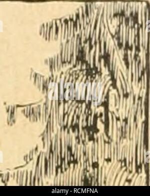 . Die Gartenwelt. Gardening. 148 Die Gartenwelt. XXI, 13 Das Haus, eingesponnen von Efeu, Wistarien und Schling- rosen, umgürtelt von einer hundertjährigen Staudenrabatte, ist so recht eigentlich ein Romanschlößchen zu nennen. Im hinteren parkartigen Garten finden wir zwei entzückende Barockbrunnen mit Meerweibchen und wasserspeiendem Faun. Hier wie in Crepy ist eine kleine Orangerie mit bis zur a^kl;;.; ,f iy| r^ ^ päL ^ LMi'itoftiJül. Please note that these images are extracted from scanned page images that may have been digitally enhanced for readability - coloration and appearance of these - Stock Photo