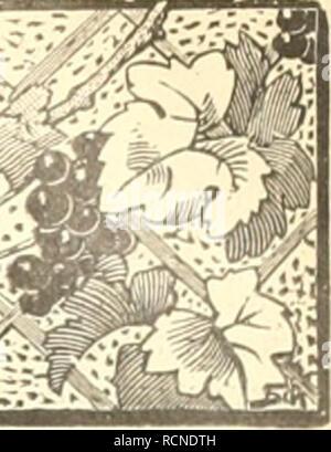 . Die Gartenwelt. Gardening. l 2i ustriertes Wochenblatt für den gesamten Gartenbau.. Jahrgang IX. 29. Oktober 1904. No. 5. Nachdruck und Nachbildung aus dem Inhalt dieser Zeitschrift wird strafrechtlich verfolgt. Orchideen. Doch Lauberde für (Jrcliideon bei Ziiiiiiiorkiiltiir. Von K. W. Gütig, Iserlohn. Der Artikel âKeine Lauberde für Orchideen bei Ziraraer- kiiltur'- in Nr. 37 des achten Jahrgangs der Gartenwelt ver- anlaÃt mich, meine Erfahrung bei Verwendung von Lauberde für Orchideen (im Zimmer) zum besten zu geben. DerVer- fa,sser des erwähnten Artikels behauptet, viel Luft und ein Stock Photo