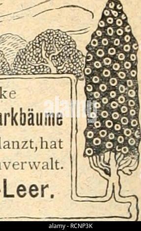 . Die Gartenkunst. Landscape gardening; Gardens -- Europe. Sehr starke Allee-, Zier- u. Parkbäume mehrmals verpflanzt, hat abzugeb. Gartenverwalt. Euenburg-Leer.. 1000000 Stecklinge von Beerenobst, Quitten, Ziersträuchern, Pappeln und Weiden. Preisliste und Sortenverzeichnis, ca. 100 Sorten enthaltend, gratis. Kultur- anweisung wird auf Wunsch jeder Sendung Ernst Altona, Baumschulen, Dingen bei Geestemünde. Kieler Baumschule Friedrich Repening, Kiel. Obstbäume in allen Formen. Alleebäume Hhorn, Plantanen, Rotdorn, Ulmen, Castanea uesca, Linden. Trauerbäume Ziergehölze, Ziersträucher, Stauden u - Stock Photo