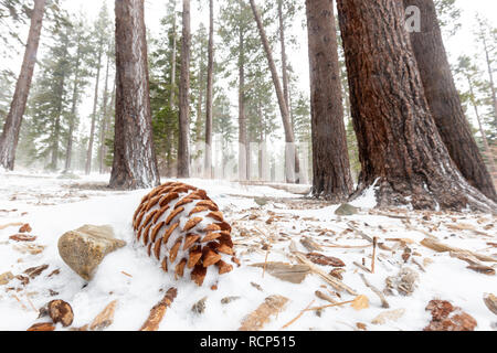 A pine cone surrounded by snow creates a peaceful winter scene. - Stock Photo
