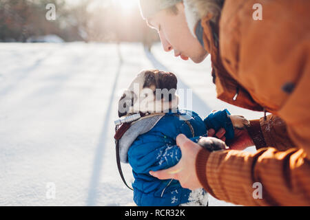 Pug dog walking on snow with his master. Puppy wearing winter coat. Man talking to pet in winter forest. Clothes for animals - Stock Photo