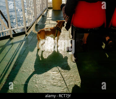 Passengers on board Craignure to Oban ferry crossing highlands Scotland - Stock Photo