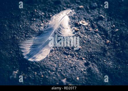 Bird's feather in the Elbstrand in Kirchwerder, Hamburg, Germany, Vogelfeder am Elbstrand in Kirchwerder, Deutschland - Stock Photo