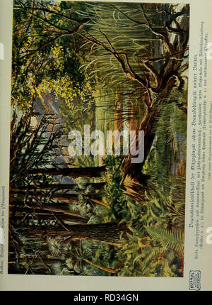 . Das Leben der Pflanze. Plants; Plants; Plants; Phytogeography. . Please note that these images are extracted from scanned page images that may have been digitally enhanced for readability - coloration and appearance of these illustrations may not perfectly resemble the original work.. Francé, R. H. (Raoul Heinrich), 1874-1943; Gothan, Walther Ulrich Eduard Friedrich, 1879-1954; Lange, Willy, 1864-. Stuttgart, Kosmos, Gesellschaft der Naturfreunde - Stock Photo