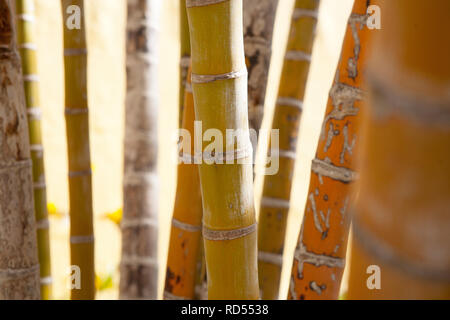 Abstract close ups of palm trees with interesting natural shades of green yellow and orange - Stock Photo