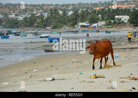 Mui Ne, Vietnam - December 27th 2017. A cow wanders along the beach of Mui Ne Fishing Village. Despite being a tourist attraction, the beach is litter - Stock Photo