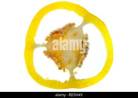 Yellow habanero pepper (Capsicum annuum), cross section