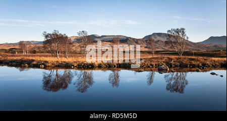 Wading into marshlands on Loch Ba, Rannock Moor, to get this serene shot of the sunset illuminating the edges of Birch trees & the mirror reflection. - Stock Photo
