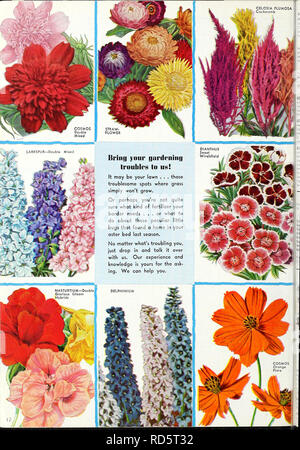 . Currie's garden annual : 1939. Flowers Seeds Catalogs; Bulbs (Plants) Seeds Catalogs; Vegetables Seeds Catalogs; Nurseries (Horticulture) Catalogs; Plants, Ornamental Catalogs; Gardening Equipment and supplies Catalogs. . Please note that these images are extracted from scanned page images that may have been digitally enhanced for readability - coloration and appearance of these illustrations may not perfectly resemble the original work.. Currie Brothers Company; Henry G. Gilbert Nursery and Seed Trade Catalog Collection. Milwaukee, Wis. : Currie Bros. Co. - Stock Photo