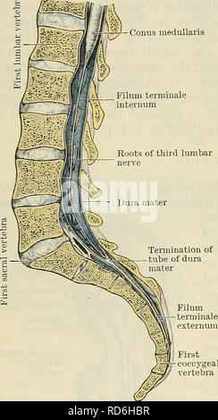 Cunningham S Text Book Of Anatomy Anatomy 518 The Nervous System At The Margin Of The Foramen Its upper part is called filum terminale internum and the lower part called filum. anatomy anatomy 518