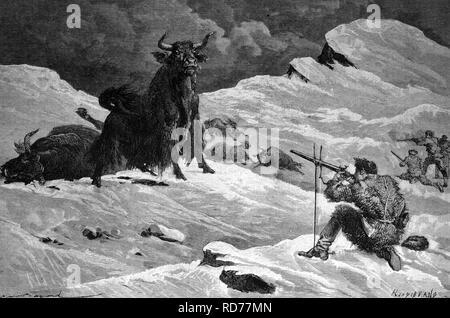Hunting for wild yaks, historical illustration, circa 1886 - Stock Photo