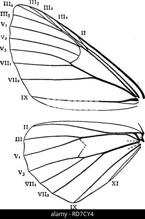 . A manual for the study of insects. Insects. LEPIDOPTERA. 271 these worms from the sharp-eyed birds. If so, we should have been still more interested in them; and we should have been even more so could some one have told us of the transformation of these loopers first into pupae and then into beautiful moths. But in those days comparatively few people thought it worth while to study insects. The larvae of Geometrids have as a rule only the last two pairs of prolegs well developed ; and hence, as the middle part of the body is not supported, they are unable to walk in the way that other caterp - Stock Photo