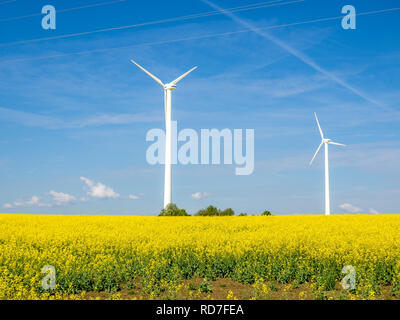 Green electricity Rapeseed field - Stock Photo