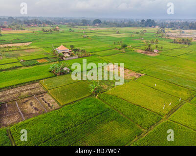 Aerial top view photo from flying drone of green rice fields in countryside Land with grown plants of paddy. Bali, Indonesia. - Stock Photo