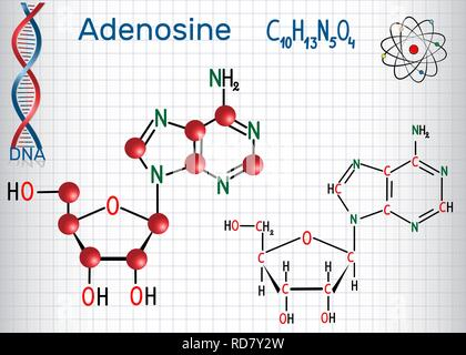 Adenosine - purine nucleoside molecule, is important part of ATP, ADP, cAMP , RNA, DNA. Sheet of paper in a cage. Structural chemical formula and mole - Stock Photo