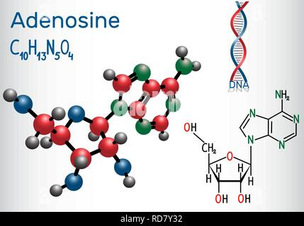 Adenosine - purine nucleoside molecule, is important part of ATP, ADP, cAMP , RNA, DNA. Structural chemical formula and molecule model. Vector illustr - Stock Photo