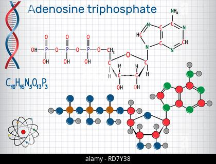 Adenosine triphosphate (ATP) molecule , is intracellular energy transfer and required in the synthesis of RNA. Sheet of paper in a cage. Structural ch - Stock Photo