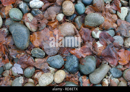 Smooth Landscaping Rocks with Fall Leaves. - Stock Photo