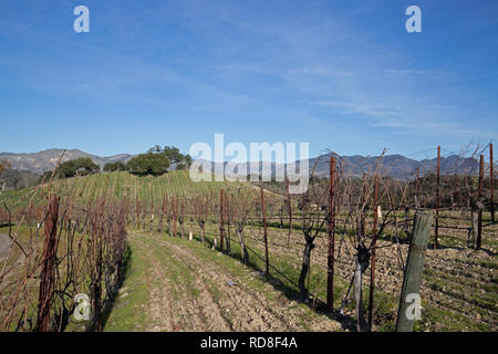Vineyard in Central California United States - Stock Photo