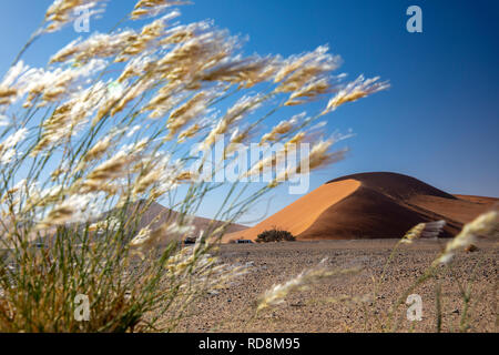 View of Dune 45 through  grasses in Namib-Naukluft National Park, Namibia, Africa - Stock Photo