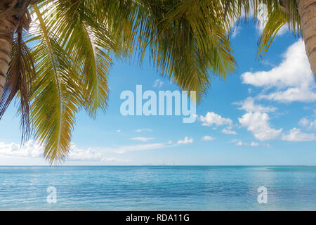 palm trees foreground on calm tropical turquoise water background, blue cloudy sky,Saint Anne beach, Guadeloupe, French West Indies. - Stock Photo