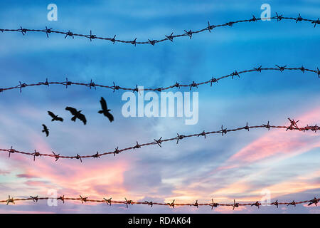 freedom and human rights concept. silhouette of free bird flying in the sky behind barbed wire with sunset background - Stock Photo