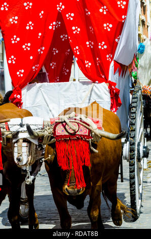 closeup to the head of an ox decorated with traditional decoration, livestock, agriculture - Stock Photo