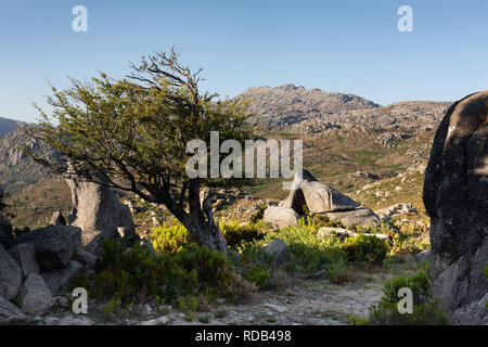 Footpath in Natural Park Peneda-Geres in Portugal with tree and rocks beside the track. - Stock Photo