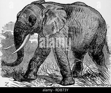The popular natural history   Zoology  206 THE AFRICAN