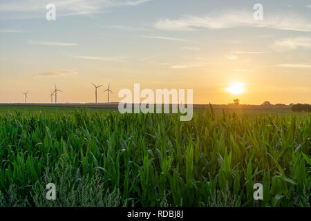 sunset over an agricultural field with windmills at the horizon, evening sky - Stock Photo