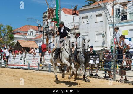 Wild bulls running and leaded by Horsemen in the streets, Festas do Barrete Verde e das Salinas, Alcochete, Setubal Province, Portugal - Stock Photo