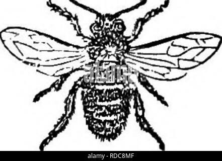 The Hive And The Honey Bee With Plain Directions For Obtaining A