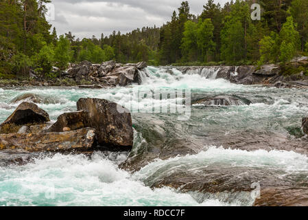 A turbulent river among boulders in a valley overgrown with birches and spruces under a stormy sky. Norway, Saltfjellet. - Stock Photo